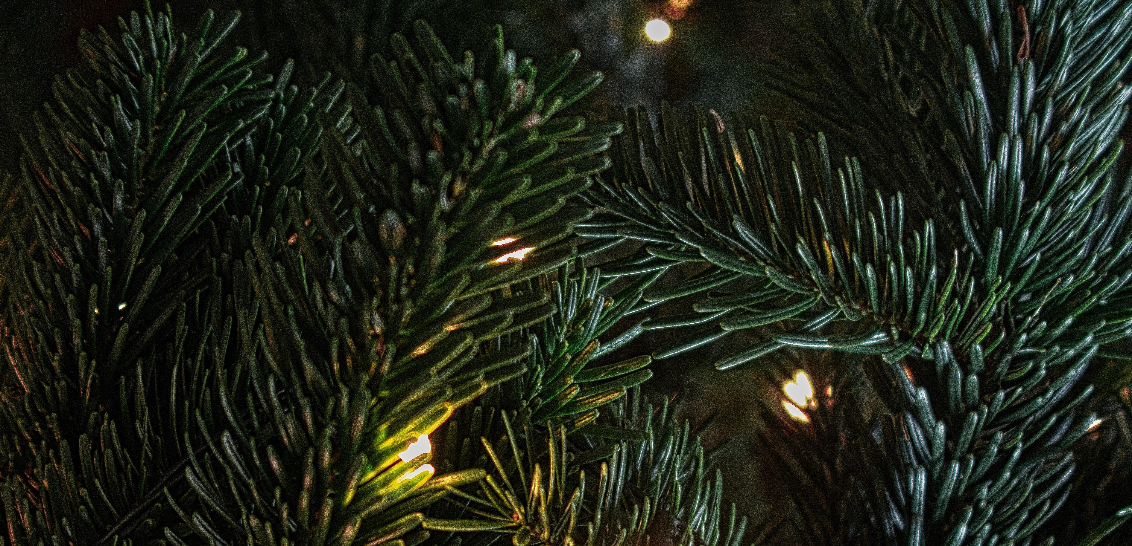 Recycle Christmas Tree Northwest Subrbs 2020 Dispose Of Your Christmas Trees, Wreaths Properly | Journal